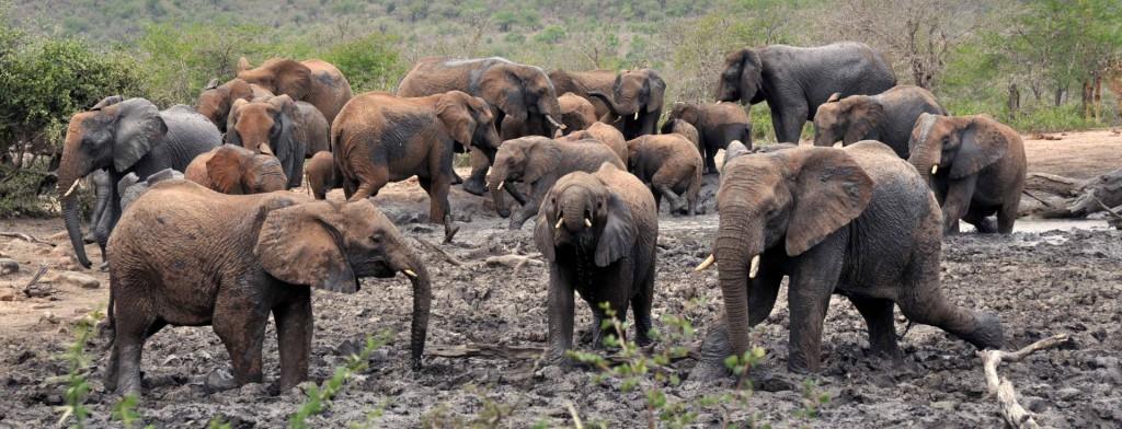 cropped-elephant.jpg