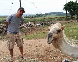 Kamel (rechts)