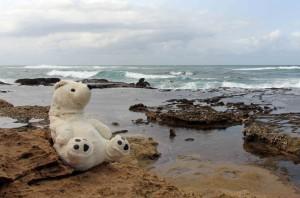 Eisbär am Meer